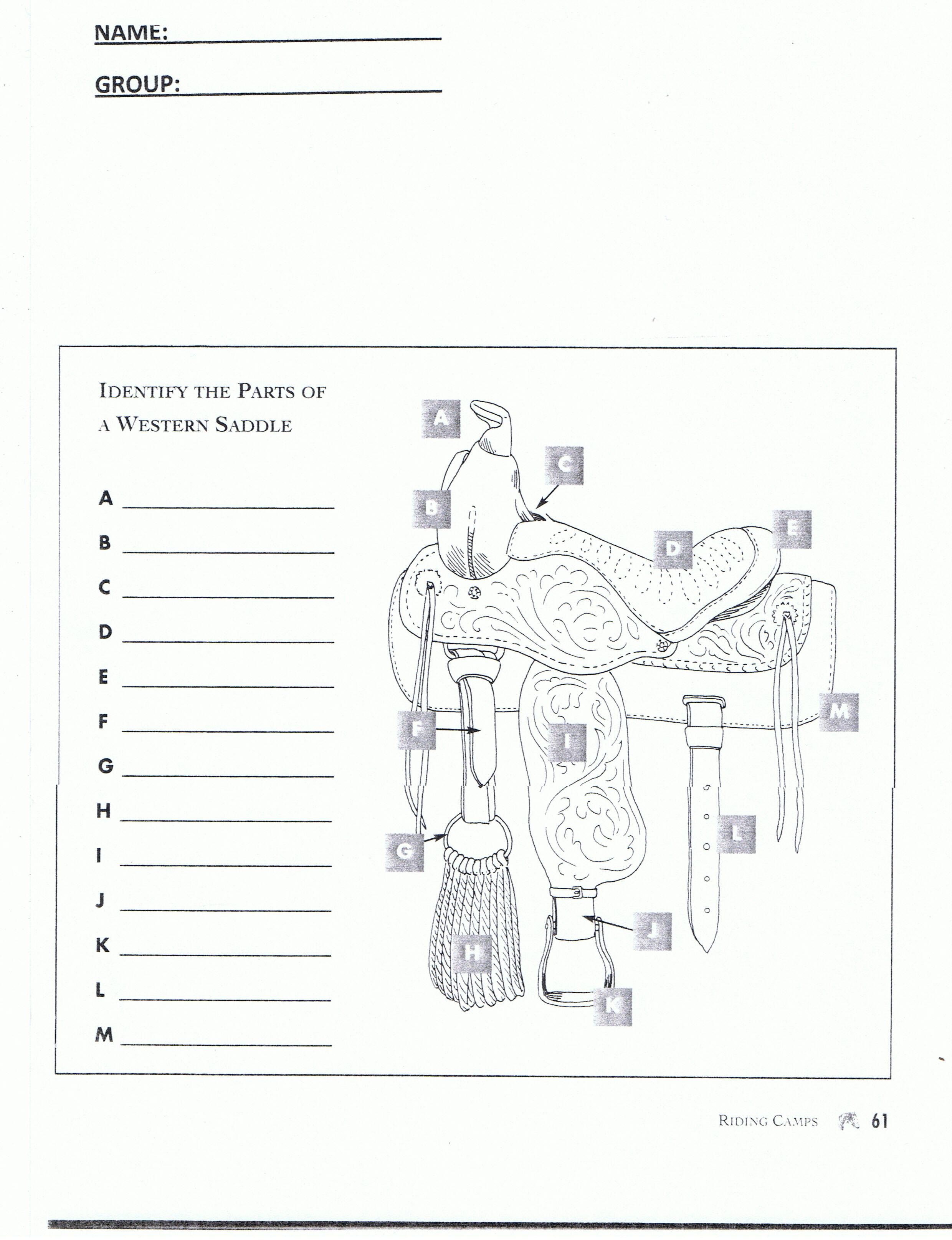 Worksheets Horse Anatomy Worksheet red oak riders english saddle horse colors