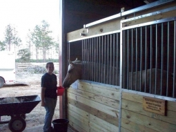 Horses fed twice daily at aprox 7 AM and 5 PM.