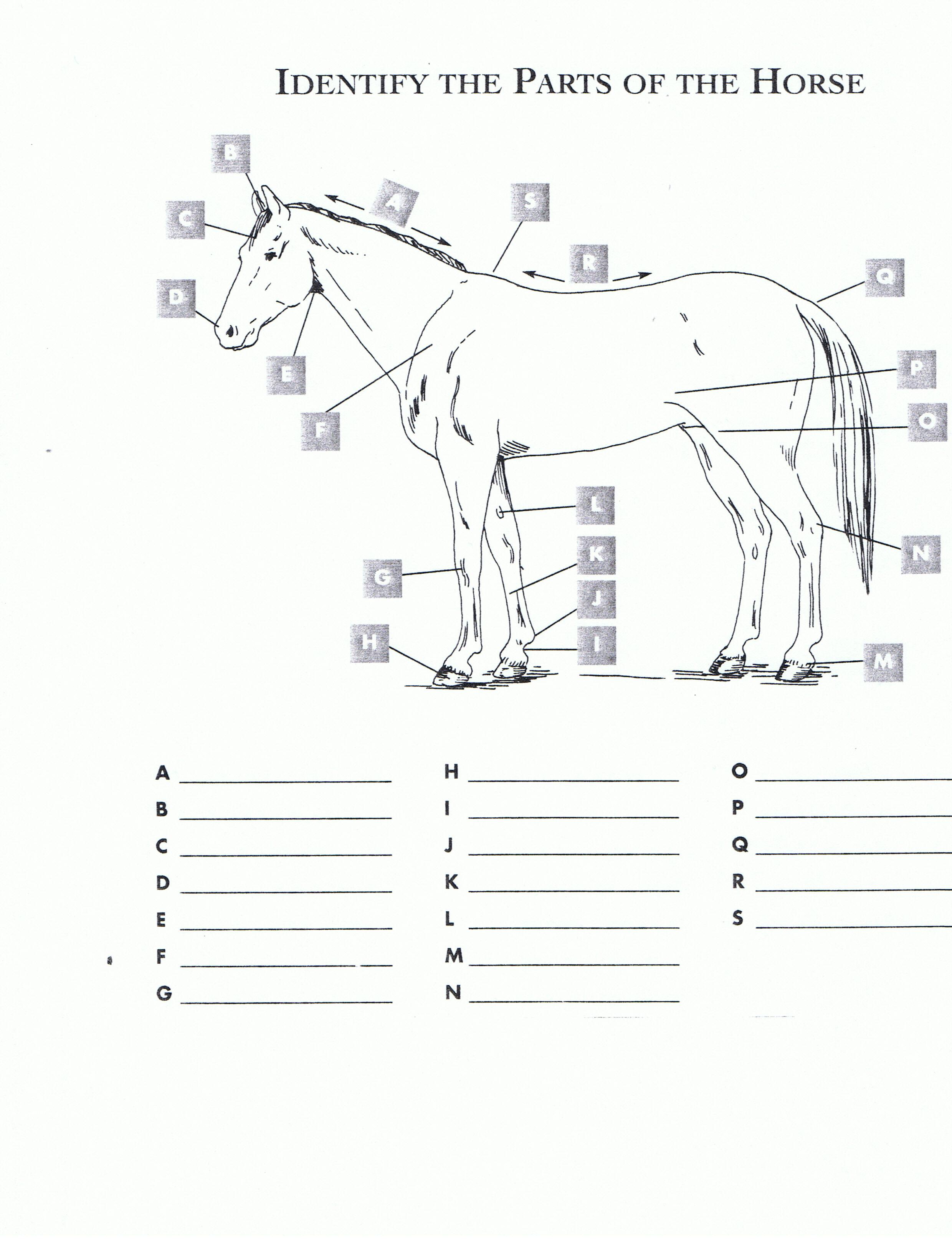 Parts of a horse hoof quiz best image konpax 2017 parts of a horse hoof quiz best image konpax 2017 ccuart Images